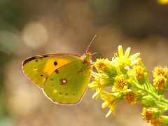 butterfly-981260__180